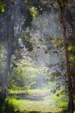 Foggy morning in the forest. Fog over a river in a forest Stock Images