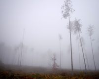 Foggy morning in a forest. Stock Photo