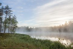 Foggy morning at forest pond Royalty Free Stock Photos
