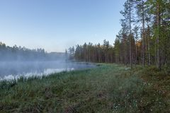Foggy morning at forest pond Royalty Free Stock Photo