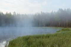 Foggy morning at forest pond Royalty Free Stock Images