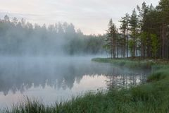 Foggy morning at forest pond Stock Photo
