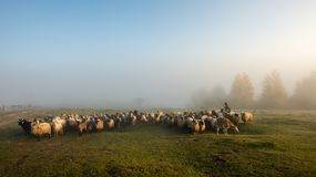 Free Foggy Morning In Romania At The Farm With Sheep And Shepherd Royalty Free Stock Photo - 128845755