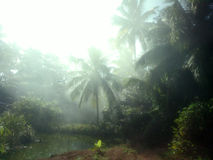 Foggy morning in the Indian forest Royalty Free Stock Photography