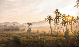 Foggy morning in the Indian jungle Royalty Free Stock Image