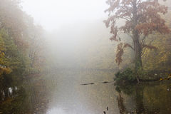 Foggy morning on the lake Royalty Free Stock Photo
