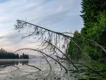Foggy morning in lake area stock photos