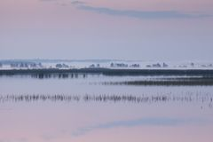 Foggy morning on the lake Royalty Free Stock Photos