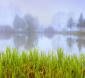 Foggy morning landscape in the autumn park Stock Photos