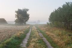 Foggy morning landscape Stock Photography