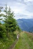 Foggy morning landscape of Carpathian mountains. Ukraine Stock Images