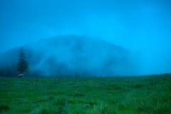 Foggy morning landscape with pine tree highland Stock Photography