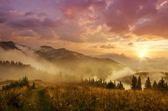 Foggy morning  landscape. Foggy morning shiny summer landscape with mist, golden meadow and sun shining Stock Photo