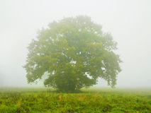 Foggy morning landscape with single tree Stock Photos