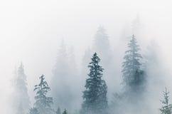 Foggy morning landscape. Foggy morning summer landscape with fir trees, seasonal travel hipster background Stock Image