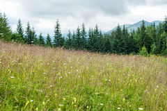 Foggy morning landscape with summer meadow at mountains Stock Photos