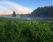 Foggy morning. Leningrad region. Russia Stock Images