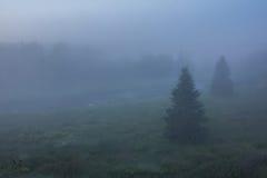 Foggy morning. Leningrad region. Russia Stock Photography
