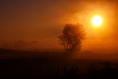 Foggy Morning. A lone tree silhouetted against the sunrise Stock Photography