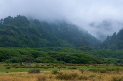 Foggy Morning. At the Lost Coast, Northern California Stock Photography