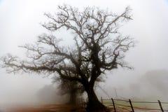 Foggy. On a foggy morning from mandalpatti coorg madikeri Stock Photos
