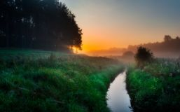 Foggy morning on meadow Royalty Free Stock Photo