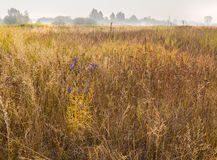 Foggy morning on a meadow in the forest-steppe zone of Ukraine Royalty Free Stock Images
