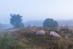 Foggy morning meadow. landscape Royalty Free Stock Photo