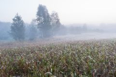 Foggy morning meadow. landscape Stock Images