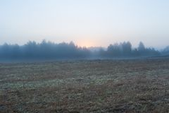Foggy morning meadow. landscape Stock Image