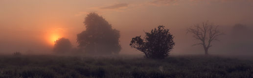 Foggy morning on meadow. Morning on meadow, misty sunrise Royalty Free Stock Image