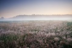 Foggy morning meadow Stock Photos