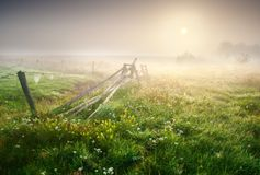 Foggy morning meadow Royalty Free Stock Images