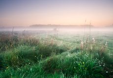 Foggy morning meadow. Foggy morning on meadow. rural summertime landscape Royalty Free Stock Images