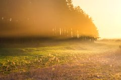 Foggy morning meadow. Foggy morning on meadow. rural summertime landscape Stock Photo