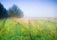Foggy morning meadow. Foggy morning on meadow. rural summertime landscape Royalty Free Stock Photo