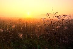 Foggy morning meadow. Foggy morning on meadow. rural summertime landscape Stock Image