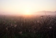 Foggy morning meadow. Foggy morning on meadow. rural summertime landscape Royalty Free Stock Photography