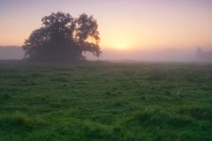 Foggy morning meadow Stock Photography
