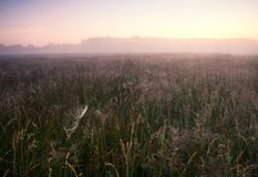 Foggy morning meadow. Foggy morning on meadow. rural summertime landscape Stock Images