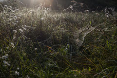 Foggy morning in a meadow with spiderweb. Stock Image