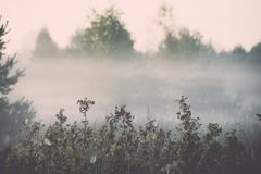 Foggy morning in the meadow - vintage effect. Foggy morning in the meadow with sun in summer - vintage effect Royalty Free Stock Photo