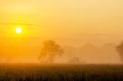 Foggy morning on meadow. Sunrise landscape background Stock Photography