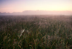 Foggy morning on meadow. sunrise landscape. Morning on a foggy meadow in poland. mid summer landscape Royalty Free Stock Images