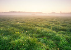 Foggy morning on meadow. sunrise landscape. Morning on polish meadow at sunset Stock Photos