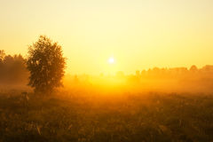 Foggy morning on meadow. sunrise landscape. Morning on polish meadow at sunset Stock Image