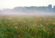 Foggy morning on meadow. sunrise landscape. Morning on polish meadow at sunset Stock Images