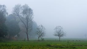 Foggy Morning with Mist on the trees, Punjab, India royalty free stock photos