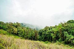 Foggy morning on the mountain, Doi Inthanon the northernmost of Siam, Chiang Mai, Thailand. Stock Photo