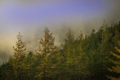 Foggy morning in the for mountain royalty free stock image